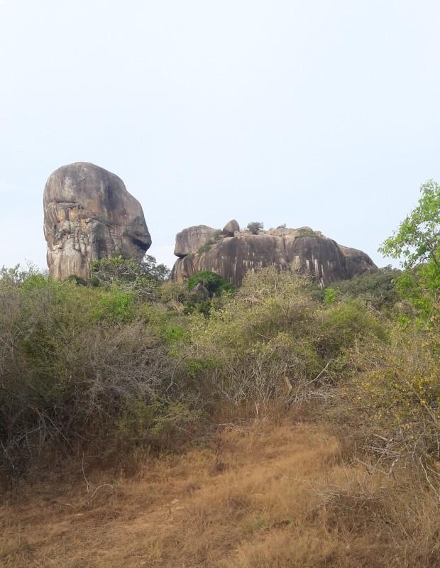 Leopards? At Yala National Park, Sri Lanka